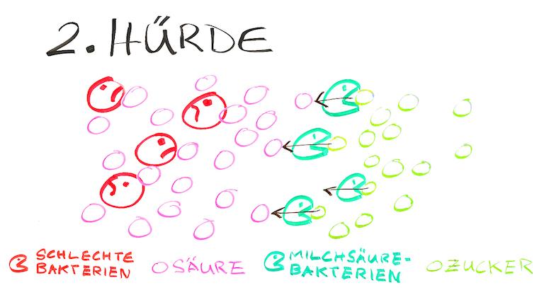 Grafik-Trocknung-Wurst-2