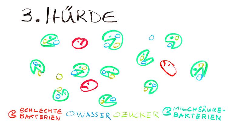 Grafik-Trocknung-Wurst-3